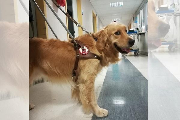 Italo in ospedale, in visita alla nonna