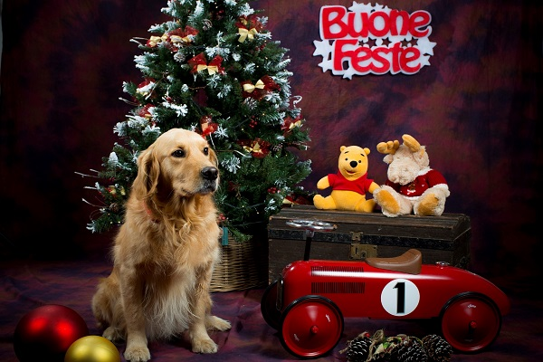 Una bella immagine di Italo circondato da decorazioni natalizie: su sfondo scuro, si vedono un albero di Natale decorato alle sue spalle e a fianco giocattoli e palline di Natale