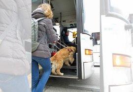Italo e Stefania stanno salendo su un bus. Stefania indossa jeans e una giacca sportiva verde militare. Italo è sempre bellissimo!